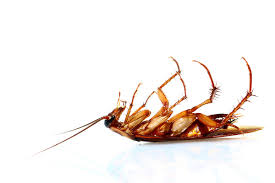 Cockroaches: Do You want them all Dead?